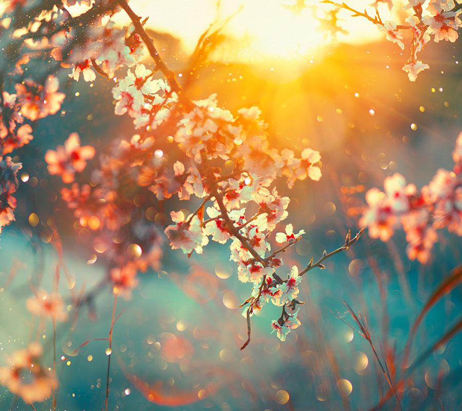 bradhams_flowers_seasonal-flowers