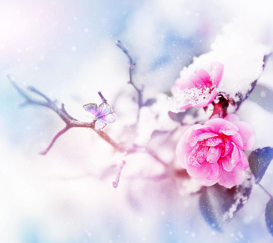 bradhams_flowers_winter